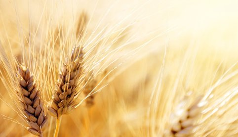 Wheat, burleigh, dodds, publishing, crops, livestock