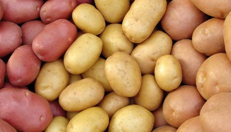 potatoes, potato research
