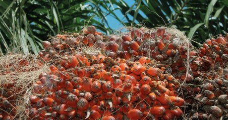 Oil palm, Burleigh, Dodds, publishing, crops, livestock