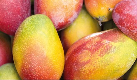 mangoes, mango research